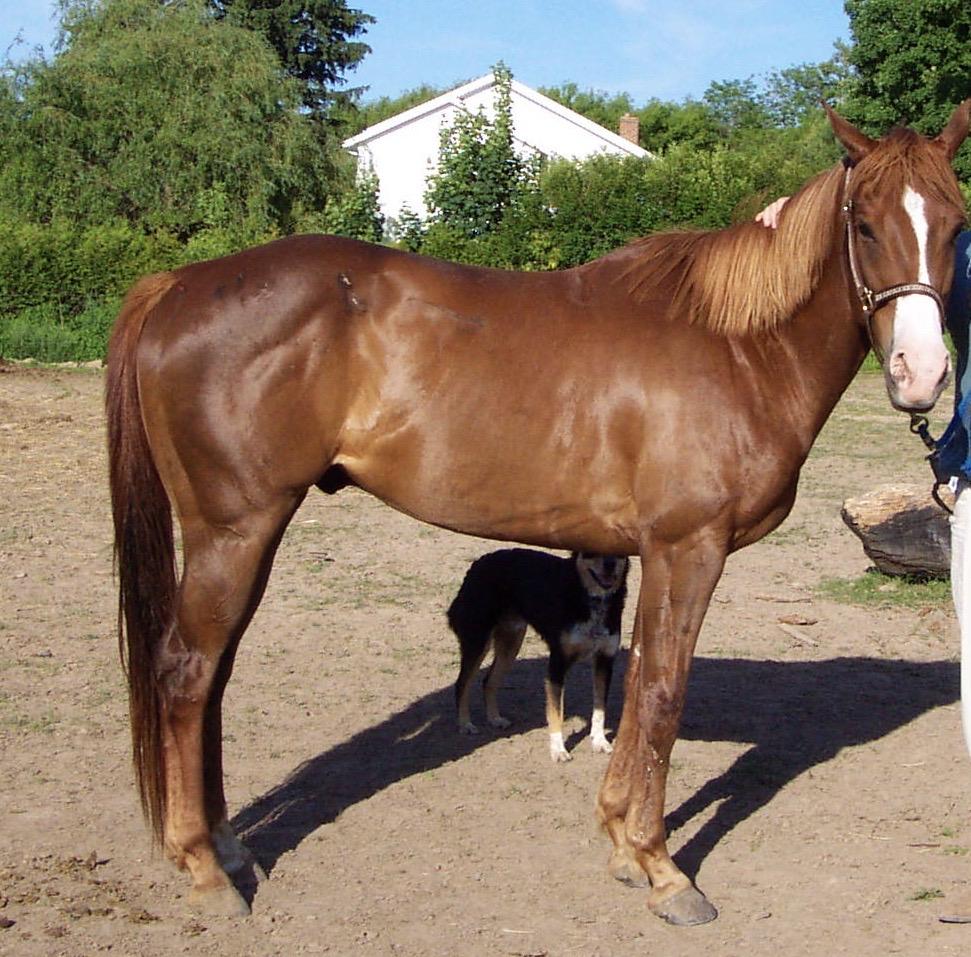 Chance the Quarterhorse in June 2001